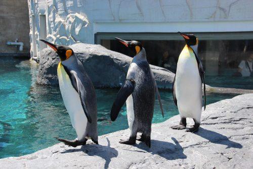 北海道の旭山動物園の写真
